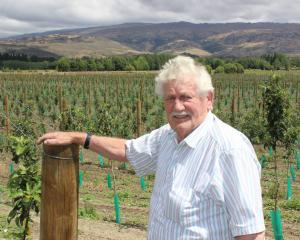 Central Otago orchardist Con van der Voort stands next to 18ha of new apple plantings in...