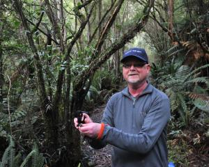 Prof Ian Jamieson releases a saddleback into the predator free environment at Orokonui...