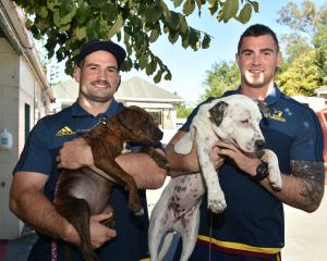 Highlanders prop Craig Millar (left), with Dobby, a Stafford, and loose forward Liam Squire, with...