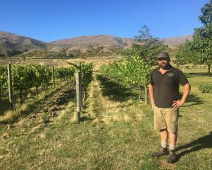 Peregrine Winery viticulturist Nick Paulin. Photo: Margot Neas.