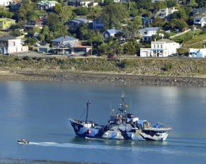 Sea Shepherd flagship Steve Irwin motors up  Otago Harbour yesterday. Photo: Stephen Jaquiery.