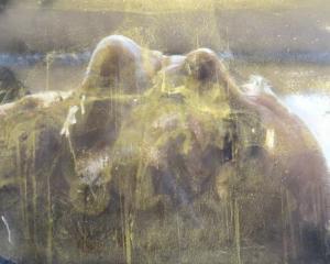 Tui, by Penny Howard.