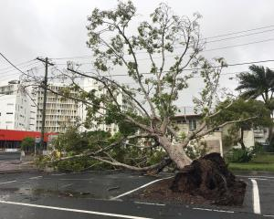 A tree is blown down in heavy winds in Mackay, Queensland while Cyclone Debbie rages on. Photo: ABC