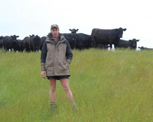 Allen Gregory with some of Mount Linton Station's Angus cows and calves. Photo by Nicole Sharp.