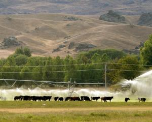 A pivot irrigator near Omakau provides grass growth to support a dairy herd. Photo: Stephen...