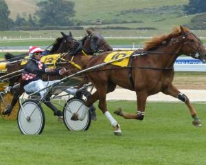 Habibti Ivy trotting freely on her way to her maiden win at Oamaru on Saturday. Photo by Matt Smith.