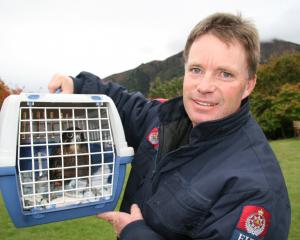 Builder and Lake Hawea Volunteer Fire Brigade Chief Fire Officer Brent Arthur holds a karearea ...
