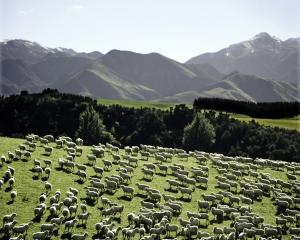 PHOTO: BEEF AND LAMB NEW ZEALAND