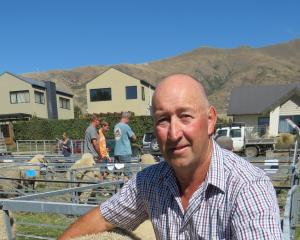 Alistair McLeod, of Egilshay Texel Stud, Wanaka, is expecting about 50 people to attend the Texel New Zealand conference, which will be held in Central Otago in the first week of May. Photo from SRL files.