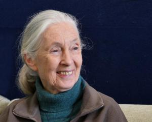 Dame Jane Goodall. Photos by Gerard O'Brien.