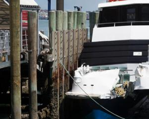 Kea collided with Devonport's Victoria Wharf at about about 13km/h. Photo: Nick Reed/NZ Herald