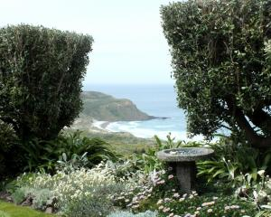 A shelter hedge with a gap cut to frame the coastal view. Photos by Gillian Vine.