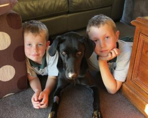 The Campbell family, of Springvale,  are delighted  one of their dogs, Skye, has returned home...