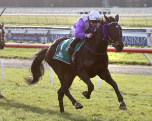 Jockey Samantha Wynne and Miss Three Stars combine to win the Amberley Cup at Riccarton on Saturday, their 10th win together. Photo: Race Images Christchurch