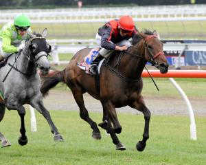 Pretty Good Excuse heads the market for today's Amberley Cup at Riccarton over 1600m. Photo:...