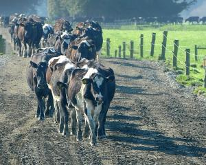 Dairy farmers have received some brighter news from Fonterra. Photo: Christine O'Connor.