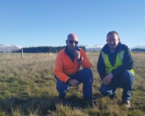 A patch of a specially bred grass at  Wanaka Airport is inspected by airport operations manager ...