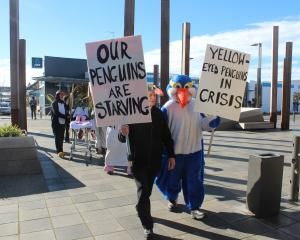 Forest and Bird South Otago members Clyde Gardener (left, black penguin) amd Ralph Cochrane lead a protest march down Clyde St in Balclutha to raise awareness for the plight of the yellow eyed penguin. PHOTO: SAMUEL WHITE