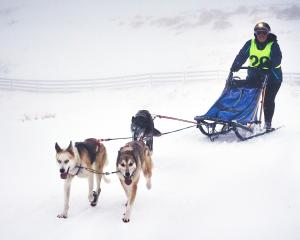 Sledding through snow and near white-out conditions is Aimee  Stoeckel,  of  Australia, and her...
