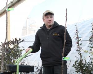 Caleb Diack, of Invercargill, has been grafting walnut wood on to rootstocks and planting the...