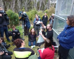 Researchers Anne Besson, Prof Alison Cree and zoology students watch on as Scott Jarvie weighs a...