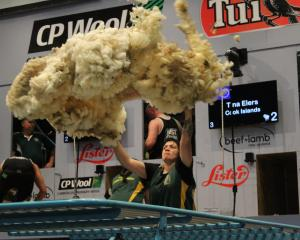 Tina Elers throws a fleece in the World Shearing and Woolhandling Championships team woolhandling...