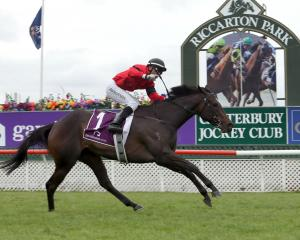 La Diosa, ridden by  Racha Cuneen, wins the 1000 Guineas at Riccarton on Saturday.