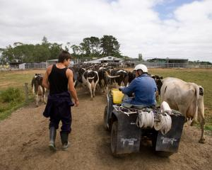 The dairy industry employs about 35,000 people in on-farm jobs in New Zealand. About 3800 of the...