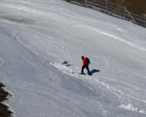Novice avalanche rescue dog Stella guides handler Michael Lundin to a person buried in the snow...