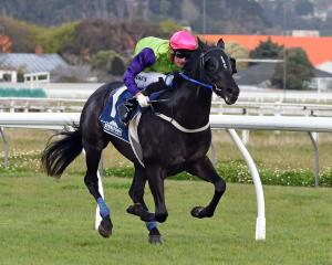 Waldorf stepped closer to his long-term goal of the 2000 Guineas at Riccarton with a win in the...