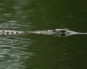 "A crocodile capsizing a boat is a ""highly bizarre situation"". Photo: Getty Images"