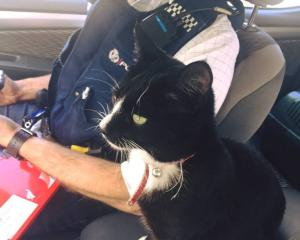 A Waikato detective managed to track Murray the cat down and reunite him with his family after he...
