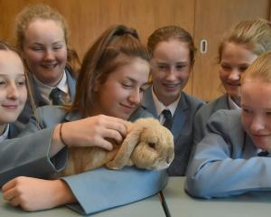 Bun Bun La Hop the rabbit enjoys the attention of St Hilda's Collegiate pupils (from left) Stella...
