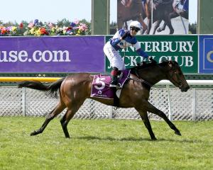 Hasahalo and Sam Spratt clear the line in the One Thousand Guineas at Riccarton on Saturday....