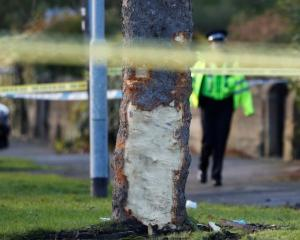 Police tape surrounds a tree damaged when a stolen car crashed into it. Photo: Reuters