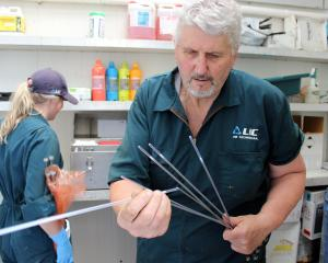 Paul Ashley puts plastic sheaths on insemination pistolets loaded with bull semen cartridges....