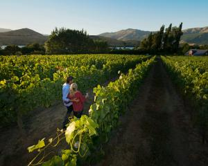 Central Otago wine experiences are proving popular. Photo: Tourism NZ