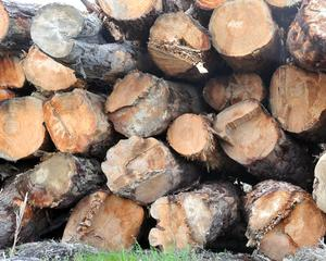 Higher forestry prices are helping the primary industry outlook. Photo: ODT.