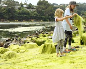 Tigerlily (5) and Carmela (9) Milner-Novak are intrigued by the extensive algae in and around the...