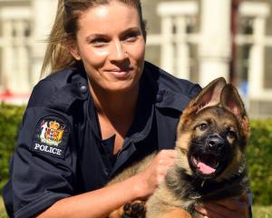 Constable Mel Duff bonds with rookie police dog Ice. Photo: Stephen Jaquiery