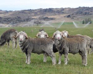 Both Otago and Southland farms are suffering from low rainfall, affecting all facets of rural...