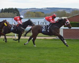 Mr Typhon and jockey Marco Chui finish boldly to win the 800m maiden at Wingatui yesterday. Photo...