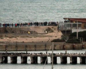 About 70 people gather on Oamaru's breakwater, outside the Oamaru Blue Penguin Colony, to watch...