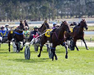 Don Domingo was a dominant winner of the Oamaru Cup on Saturday for driver Blair Orange, who had...