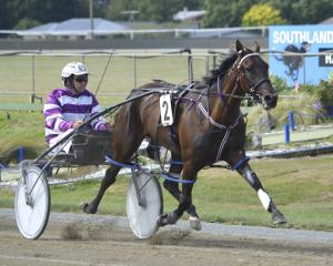 Westwood Beach pacer Hopes And Dreams is a leading contender for the feature pace at tomorrow's...
