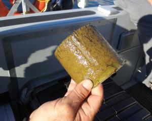 The clogged inlet filter of a boat after two days' use on Lake Wanaka. Photo: Supplied