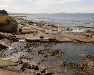 Shag Point would make a perfect marine reserve, the writer believes. Photo supplied.