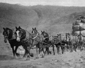 Bringing the season's wool clip to the railhead: A waggon-load en-route to Cromwell from Mt Pisa...
