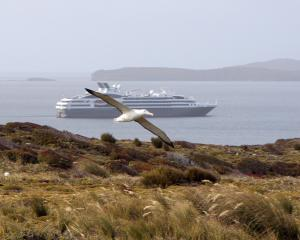 A southern royal albatross flies over its Enderby Island nesting area as  French expedition...