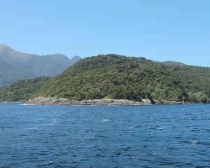 Bauza Island, Doubtful Sound, where the divers got into trouble. Photo: Wikicommons
